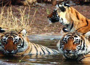 Bardia National Park Tour in Nepal
